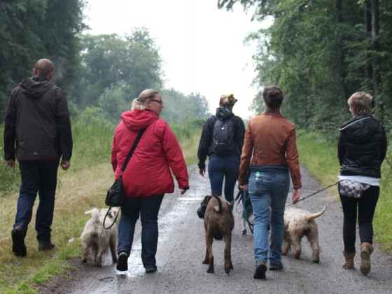 Social Walk III