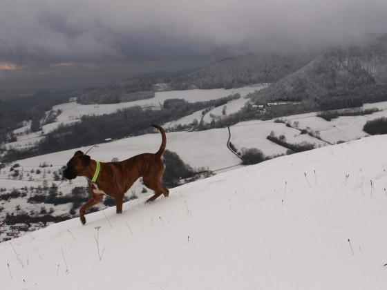 Schnee liegt auf dem Land