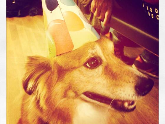 Partyhund :)