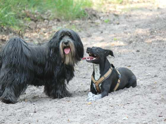 Lua und Piet
