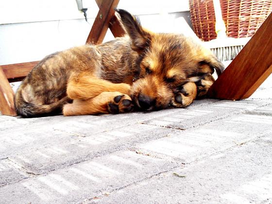 Schlaf in der Mittagssonne