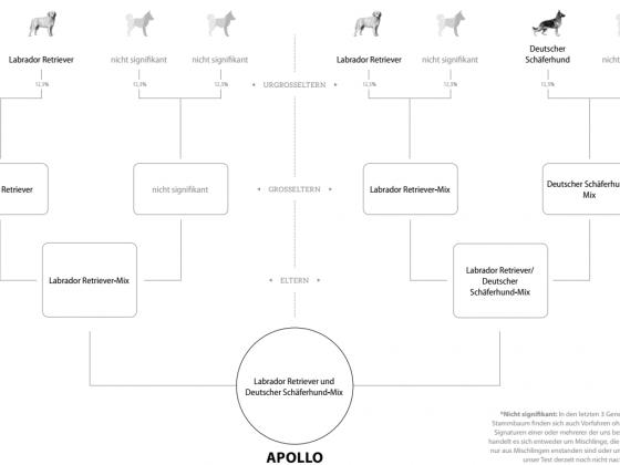 Apollos DNA-Testergebnisse
