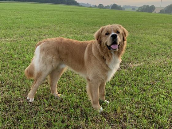 Bailey mit 14 Monaten