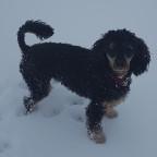 Jasper im Schnee