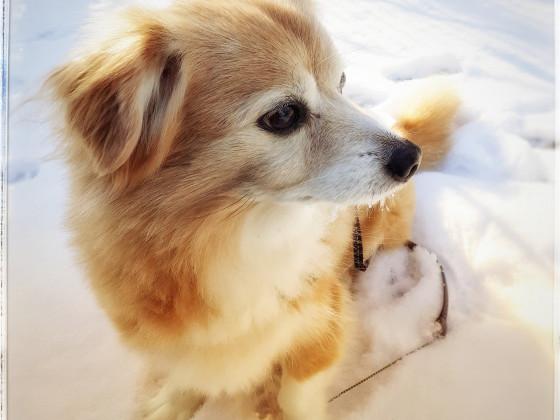 Hunde-Opi