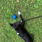 Draußen mit dem Ball