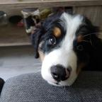 Lokis Hundeblick