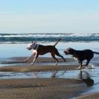 Oregon, Beverley Beach