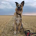 Emma im Feld
