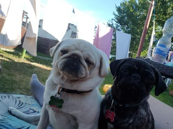 Becks und Bailey
