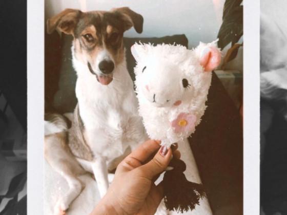 Maya und ihr Fritz