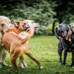 Begegnungen mit anderen Hunden.jpeg