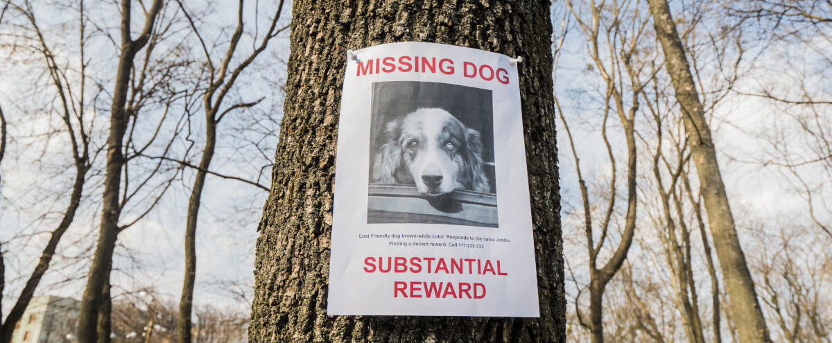 missingdog.jpeg