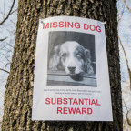 missingdog.jpeg