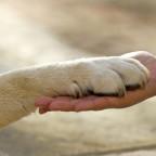 Therapiehund.jpg