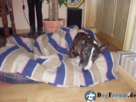 temperatur im schlafzimmer sonstiger talk rund um den hund das gro e hundeforum. Black Bedroom Furniture Sets. Home Design Ideas